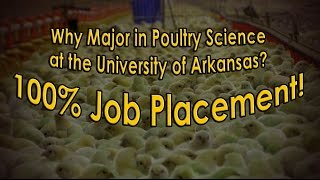 Why Major in Poultry Science?  100% Job Placement!