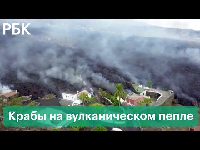 Раскаленный пепел под водой, спасение собак и эвакуация. Извержение вулкана на острове Ла-Пальма