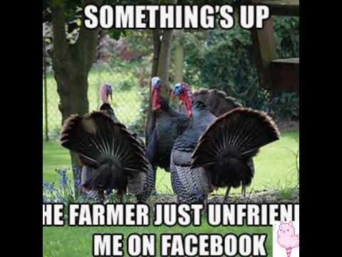 Turkey Memes Youtube