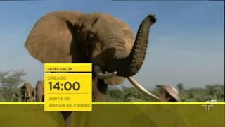 Chamada   As aventuras de Andy e os animais selvagens