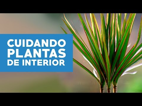 C mo cuidar las plantas de interior youtube for Plantas ornamentales de interio