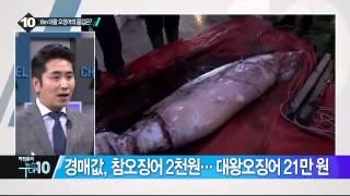 울산 앞바다에 나타난 8m 대왕 오징어 몸값은 채널a 뉴스top10