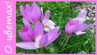 Цветы осенью. Самые поздние цветы. Осенние многолетние цветы.