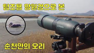 탐조용 망원경으로 본 …