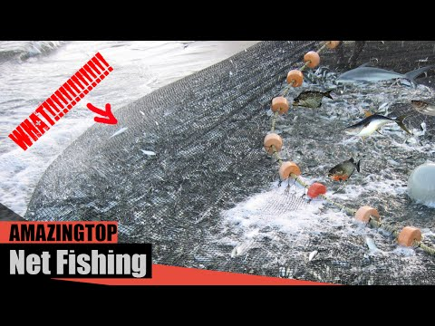 Top 10 Amazing Catch Big Fish With Net Fishing Video
