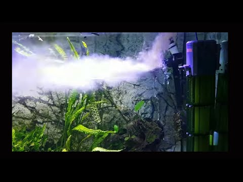 Testing The Power! Eheim Filter Review! Demonstrating Eheim XL 2252.