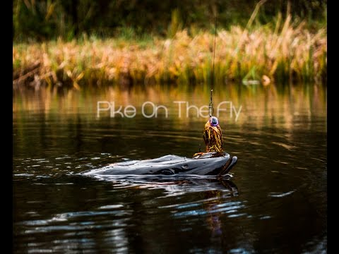 Polder Action - Pike On The Fly