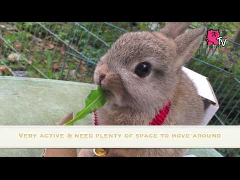 Top 10 Most Popular Rabbit Breeds in Malaysia