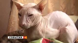 Голые кошки отвоевывают место у волосатых