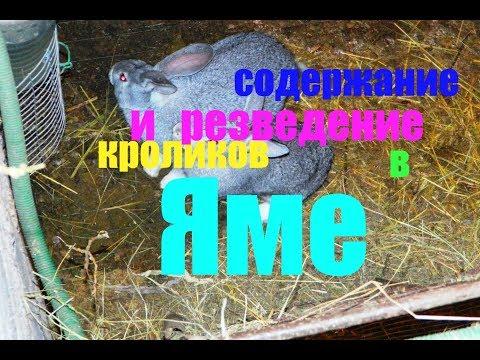 Содержание кроликов в яме