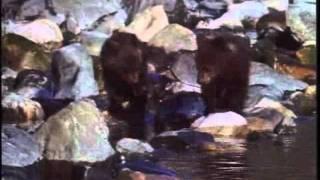 Серия фильмов о природе - Байкал