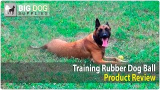 Belgian Malinois And Labrador Retriever Playing With Rubber Dog Ball