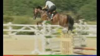 Springpferdeausbildung heute, Elmar Pollmann-Schweckhorst, pferdia tv