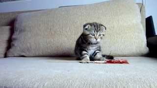 Too cute! Rosy Kitten
