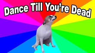 What is Dance Till You're Dead?  A look at the yeah yeah yeah's / brazillian dog meme