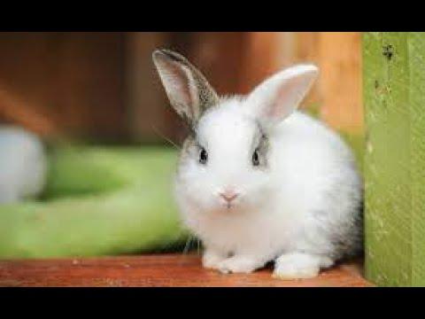 Lilis Suryani - Gang Kelinci