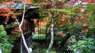 紅葉の京都8 錦秋の天龍寺~宝巌院~法輪寺 Autumn Leaves in Kyoto 2014 ~ Tenryuji temple