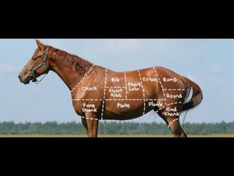 Horse Meat Is A Great Source Of Protein