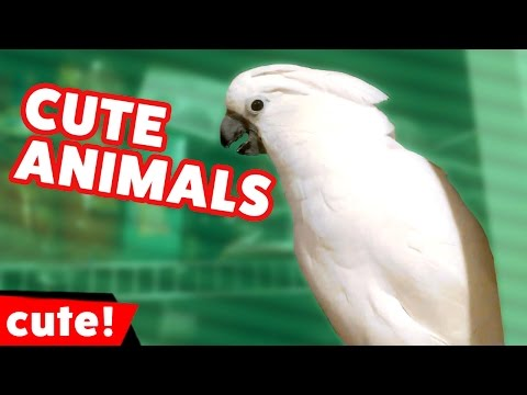 Funniest Animal Noises, Clips & Bloopers December 2016 Weekly Compilation | Kyoot Animals