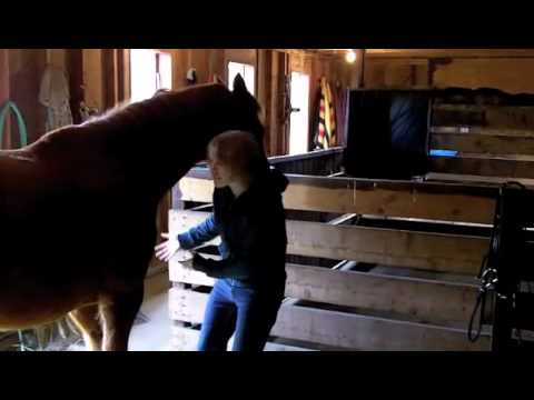 Moving around a horse