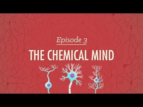 the-chemical-mind:-crash-course-psychology-#3