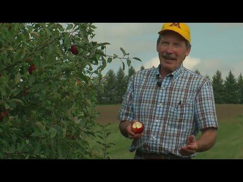 Finding Minnesota: Honey Crisp Man