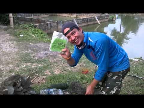 ชาเขียว  จัดหนักที่บ่อตกปลาวิฑูรย์ฟาร์ม