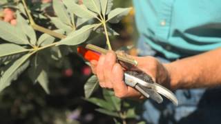 How to Cut Lilac Blooms : Fall & Winter Gardening Tips