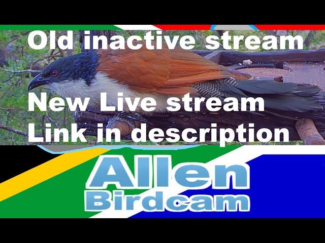 LIVE HD - Hornbill, Wood hoopoes, Coucal, Loeries, Bushbaby, Genet, Fruit Bat and more (50+ Species)