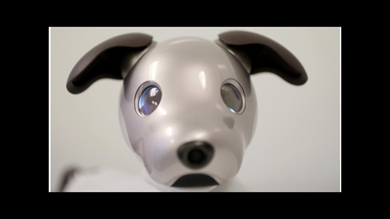 Check out Sony's New Aibo Robot Dog worth $2,899 at Sales Price