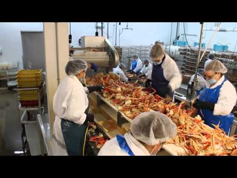 Cube Seafood - Japanese Crab Section Grader
