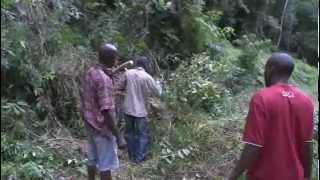 Gabon: Elephant Man