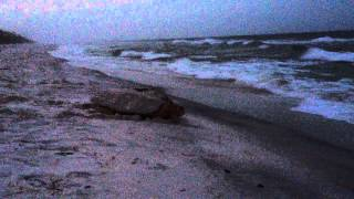 South Walton Turtle Watch 8.9.15 Part 3