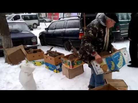 СМОТРИ! НЕ ПРОПУСТИ! Луганск ярмарка (кролики)03.03.2018
