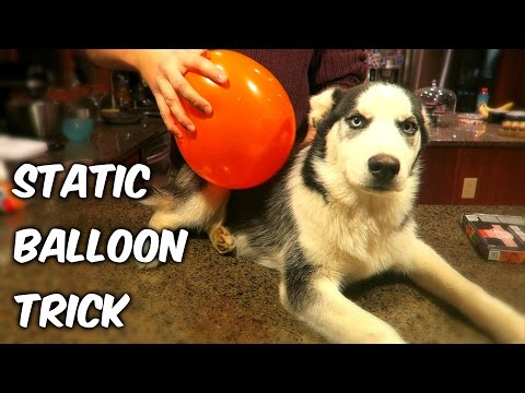 Static Balloon - Science Experiment