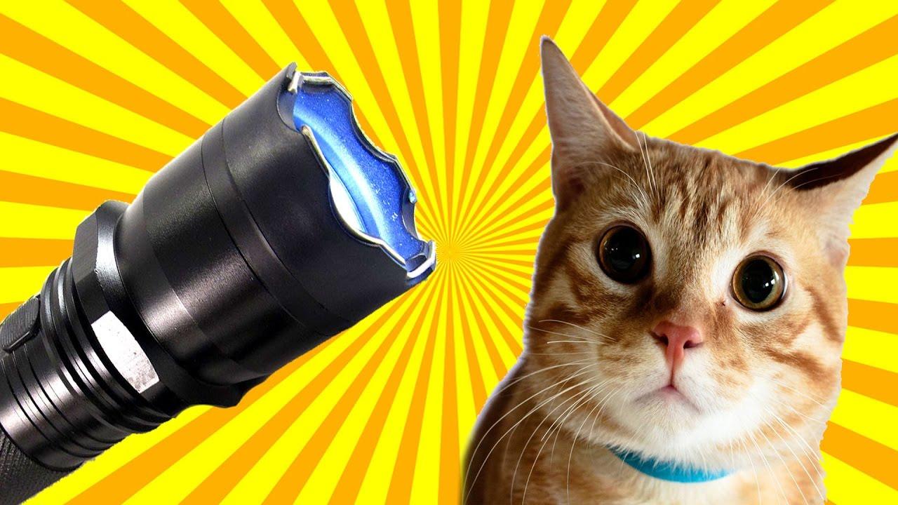Кот с шокером