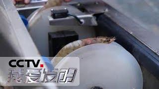 《我爱发明》 20190712 让虾线飞| CCTV科教