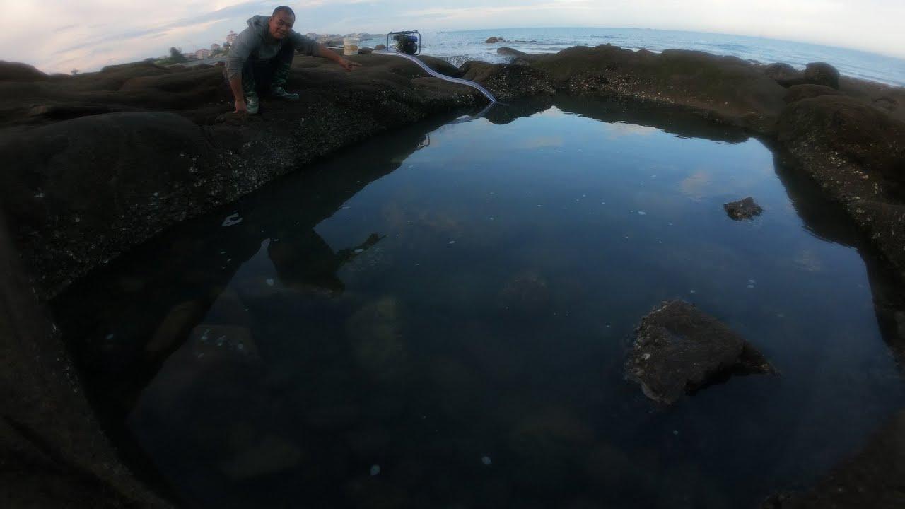 荒島野坑沒人抽,魚群直接扎窩,難得一見的保護動物都出現了