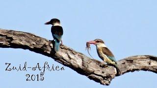 Film Z Afrika 2015