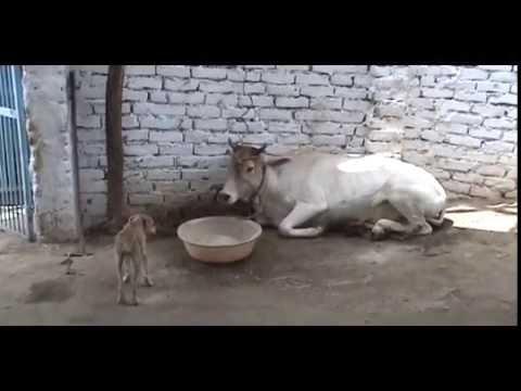 """""""AnimalAid -  India"""""""