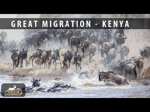 Kenya Great Migration Photo Safari with Stu Porter & WILD4 African Photographic Safaris