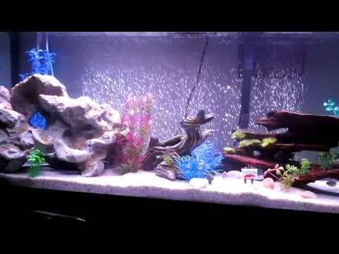 Fluval 55 Gallon Aquarium with Fluval M200 and Fluval C4 (HD 720p)