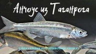 Рыбалка в Таганроге. Ловля крупной уклейки на поплавочную удочку.