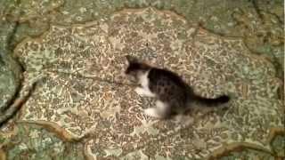 Отдаю котят в добрые руки.Москва. 28.11.2012