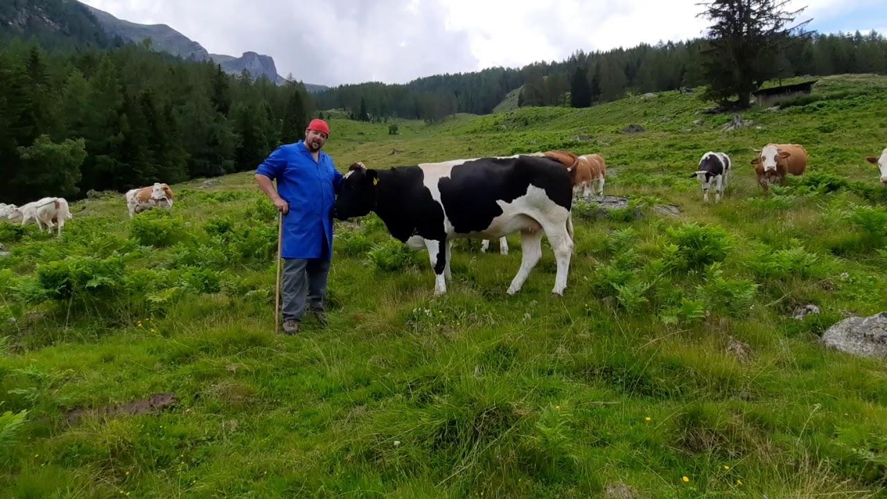 Petutschnig Hons - Kühe mit oder ohne Hörner?