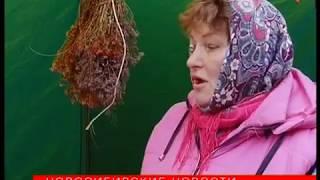 Свеклу и картошку из Сузуна расхватали на ярмарке у ДК Горького