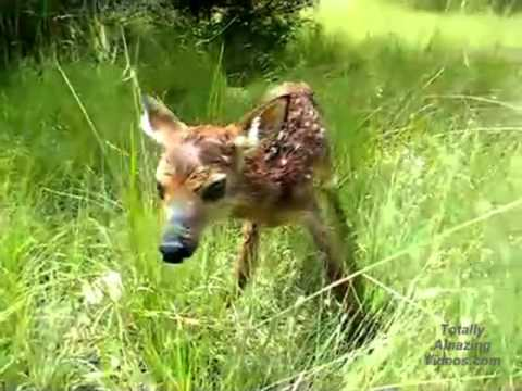 how to raise a baby whitetail deer