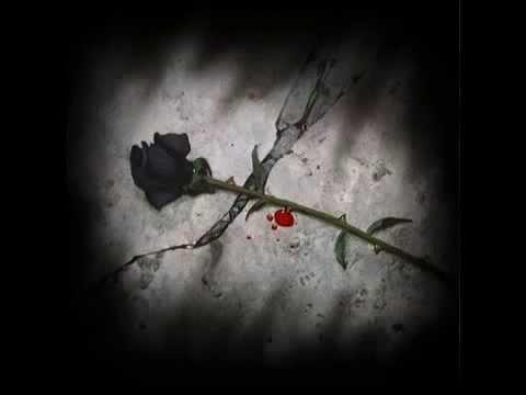 Black Rose; Dying