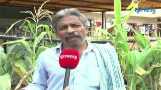 Attractive Terrace Gardening in Guntur and Kakinada | Express Tv