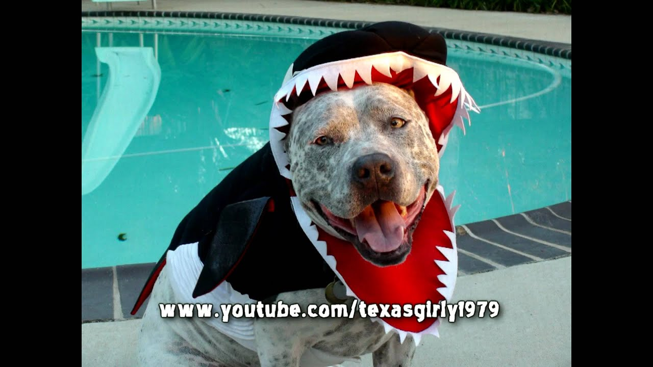 Halloween Killer Whale Costume - YouTube : dog whale costume  - Germanpascual.Com